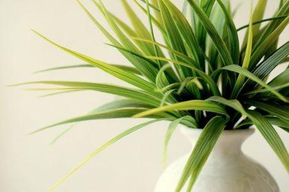 סוגי צמחיה מלאכותית לבית ולמשרד